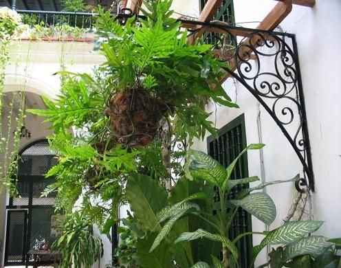 'hostal valencia patio' Check our website Cuba Travel Hotels .com often for updates.