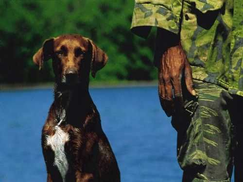 'Hotel Islazul - Florida - hunting dog' Check our website Cuba Travel Hotels .com often for updates.