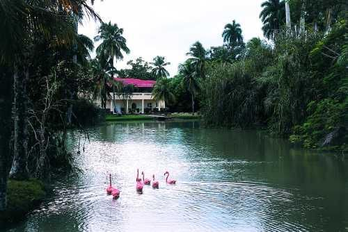 'Villa - San Jose del Lago - flamingos' Check our website Cuba Travel Hotels .com often for updates.